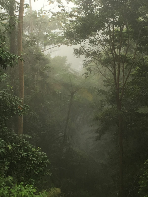 rainforest-p